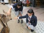 奈良公園の鹿との1コマ