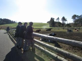 牛を見学する様子